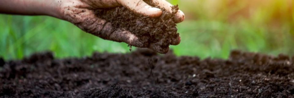Sustainable, Phosphorous  Free Fertilizers